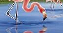 Jeu Beautiful flamingos puzzle