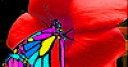Jeu Butterfly eating flower slide puzzle