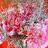 Carnation Topiary Jigsaw