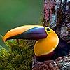 Jeu Colored beak in the mountain puzzle en plein ecran