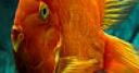 Jeu Colorful flatfish puzzle