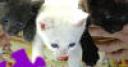 Jeu Cute Kittens Jigsaw
