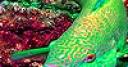 Jeu Green fluorescent fish puzzle
