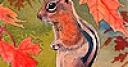 Jeu Lovely autumn squirrel slide puzzle