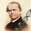 Jeu Mendel Quiz (Genetics)