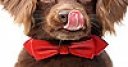 Jeu Red tie and dog slide puzzle