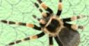 Jeu Spider TD