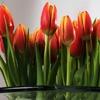 Jeu Tulips Jigsaw en plein ecran