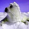 Jeu Winter season and animals puzzle en plein ecran